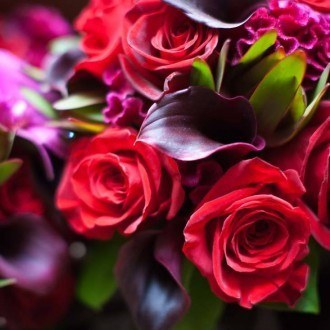 Dramatic Red Flowers