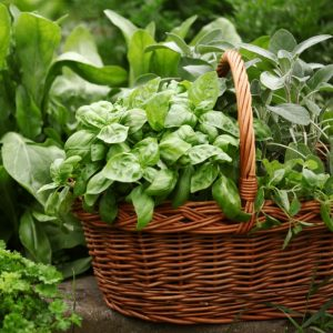 herb basket capture