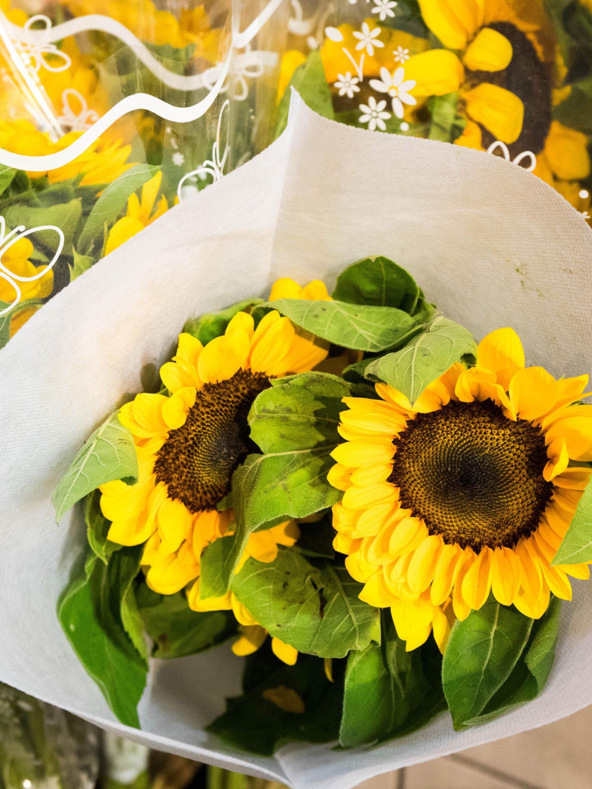 5 Stem Cut Sunflower Bouquets Pick Up Special Only Van Belle Flowers